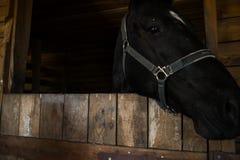 Μαύρο άλογο στο σταύλο Στοκ εικόνα με δικαίωμα ελεύθερης χρήσης