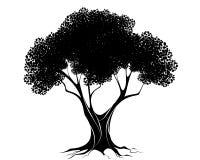 μαύρο δέντρο σκιαγραφιών Ελεύθερη απεικόνιση δικαιώματος