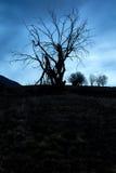 μαύρο δέντρο Στοκ εικόνες με δικαίωμα ελεύθερης χρήσης