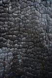 Μαύρο απανθρακωμένο ξύλινο εσωτερικό κούτσουρων που καίγεται σε μια δασική πυρκαγιά Στοκ Εικόνες