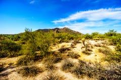 Μαύρο βουνό με τους κάκτους Suguaro και Cholla και λίθοι στην έρημο της Αριζόνα Στοκ Εικόνες