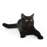 Μαύρο βρετανικό γατάκι Στοκ Φωτογραφίες