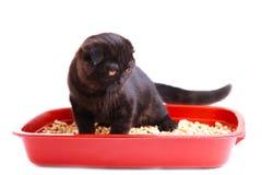 Μαύρο βρετανικό shorthair γατών με την τουαλέτα γατών που απομονώνεται σε ένα άσπρο υπόβαθρο στοκ φωτογραφία με δικαίωμα ελεύθερης χρήσης