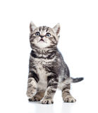 Μαύρο γατάκι γατών στην άσπρη ανασκόπηση Στοκ εικόνα με δικαίωμα ελεύθερης χρήσης