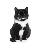 μαύρο γατάκι γατών Στοκ φωτογραφία με δικαίωμα ελεύθερης χρήσης
