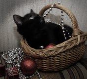 μαύρο γατάκι καλαθιών Στοκ Εικόνες