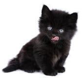 μαύρο γατάκι που γλείφει λίγα Στοκ Εικόνα
