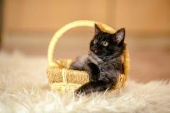 Μαύρο γατάκι σημαντικό που καταρρέει σε ένα ψάθινο καλάθι ηλικία 1 μήνας στοκ φωτογραφία με δικαίωμα ελεύθερης χρήσης