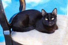Μαύρο γατάκι στην καρέκλα στοκ φωτογραφίες με δικαίωμα ελεύθερης χρήσης