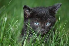 μαύρο γατάκι χλόης Στοκ Εικόνες