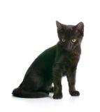 Μαύρο γατάκι Στοκ Φωτογραφίες