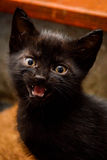 μαύρο γατάκι Στοκ εικόνα με δικαίωμα ελεύθερης χρήσης