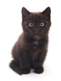 μαύρο γατάκι Στοκ Εικόνα