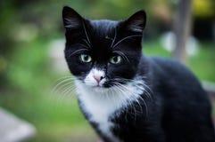 μαύρο γατάκι Στοκ Φωτογραφία