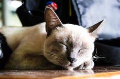 1 μαύρο γατών 2 λευκό έκδοσης γατακιών χρώματος ημίτονο Στοκ Φωτογραφίες