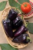 μαύρο γλυκό πιπεριών Στοκ φωτογραφία με δικαίωμα ελεύθερης χρήσης
