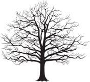 Μαύρο γυμνό δέντρο σκιαγραφιών επίσης corel σύρετε το διάνυσμα απεικόνισης Στοκ φωτογραφία με δικαίωμα ελεύθερης χρήσης