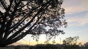μαύρο δέντρο κλάδων στο κτήριο στον ουρανό βραδιού Στοκ Φωτογραφίες