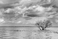 μαύρο λευκό δέντρων Στοκ Εικόνες