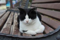 μαύρο λευκό γατών Στοκ Φωτογραφία