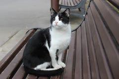 μαύρο λευκό γατών Στοκ εικόνες με δικαίωμα ελεύθερης χρήσης