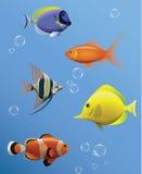 μαύρο λευκό γραμμών ψαριών σχεδίων ενυδρείων Στοκ Φωτογραφίες