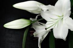 μαύρο λευκό κρίνων ανασκόπ&e Στοκ Εικόνες
