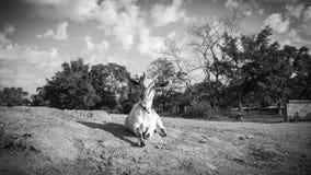 μαύρο λευκό Στοκ Φωτογραφία
