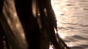 Μαύρο θηλυκό υγρό φόρεμα ενδυμάτων στην επιφάνεια των φωτογραφικών διαφανειών νερού απόθεμα βίντεο