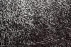 μαύρο διάνυσμα δέρματος α&nu Στοκ Εικόνα