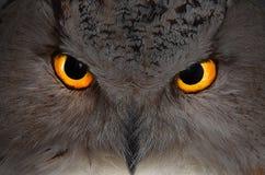 μαύρο διάνυσμα κουκουβαγιών μελανιού απεικόνισης αετών σχεδίων στοκ εικόνα με δικαίωμα ελεύθερης χρήσης