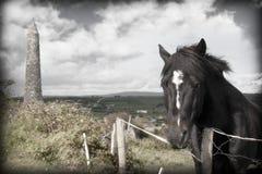 Μαύρο ιρλανδικό άλογο και αρχαίος στρογγυλός πύργος Στοκ φωτογραφία με δικαίωμα ελεύθερης χρήσης
