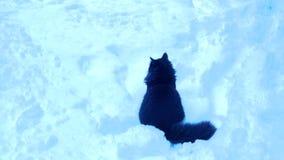 Μαύρο κάθισμα γατών σε ένα χιόνι απόθεμα βίντεο