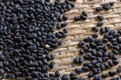Μαύρο καρύδι Στοκ Εικόνα