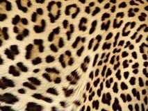 μαύρο καφετί leopard χρώματος πορτοκαλί άνευ ραφής δέρμα Στοκ Εικόνα