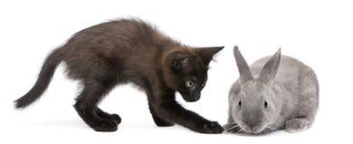 μαύρο κουνέλι παιχνιδιού &g Στοκ Εικόνες