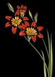 μαύρο κόκκινο λουλουδιών ανασκόπησης Στοκ Φωτογραφίες