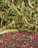 μαύρο κόκκινο φασολιών Στοκ Φωτογραφία