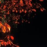 μαύρο κόκκινο στοκ εικόνες