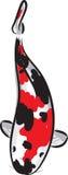 μαύρο κόκκινο koi κυπρίνων πο&u διανυσματική απεικόνιση