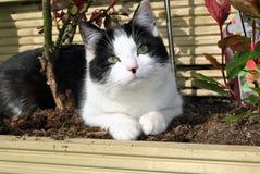 μαύρο λευκό γατακιών Στοκ εικόνα με δικαίωμα ελεύθερης χρήσης