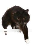 μαύρο λευκό γατών ανασκόπη& Στοκ φωτογραφίες με δικαίωμα ελεύθερης χρήσης