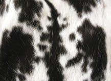 μαύρο λευκό γουνών Στοκ Φωτογραφίες