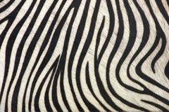 μαύρο λευκό γραμμών Στοκ Εικόνα
