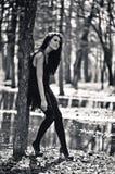 μαύρο λευκό δέντρων φωτογ& Στοκ Εικόνες
