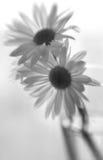 μαύρο λευκό εξεδρών Στοκ Εικόνες