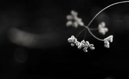 μαύρο λευκό λουλουδιώ&n Στοκ εικόνες με δικαίωμα ελεύθερης χρήσης