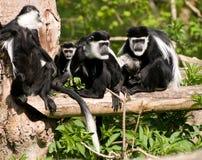 μαύρο λευκό οικογενει&a στοκ φωτογραφία με δικαίωμα ελεύθερης χρήσης