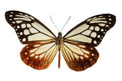 μαύρο λευκό πεταλούδων Στοκ φωτογραφίες με δικαίωμα ελεύθερης χρήσης