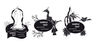 μαύρο λευκό πουλιών Στοκ φωτογραφίες με δικαίωμα ελεύθερης χρήσης